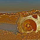 Shell beach by cmcelhaney