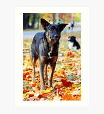 Dog in brightly colored autumn leaves Art Print