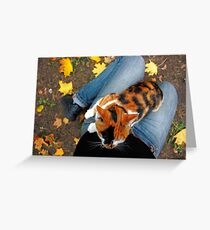 cat sitting on legs in autumn Greeting Card