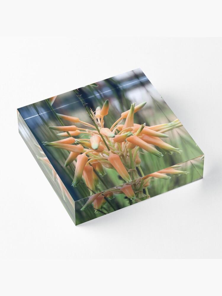 Alternate view of Aloe cooperi - flower Acrylic Block