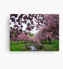 Blossom Beauty - Hurd Park Canvas Print