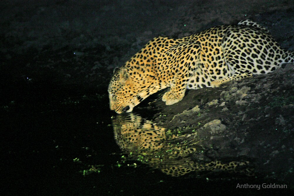 Makwela having a drink by Anthony Goldman