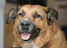 My dog Charlie 2 by Peter Barrett