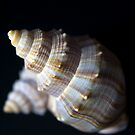 Seashells by Sue  Cullumber