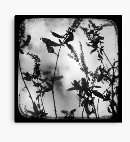 Died Pretty - TTV Canvas Print