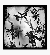 Died Pretty - TTV Photographic Print