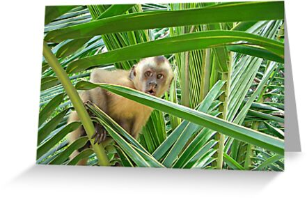 Monkey in Brazil  by mikebless