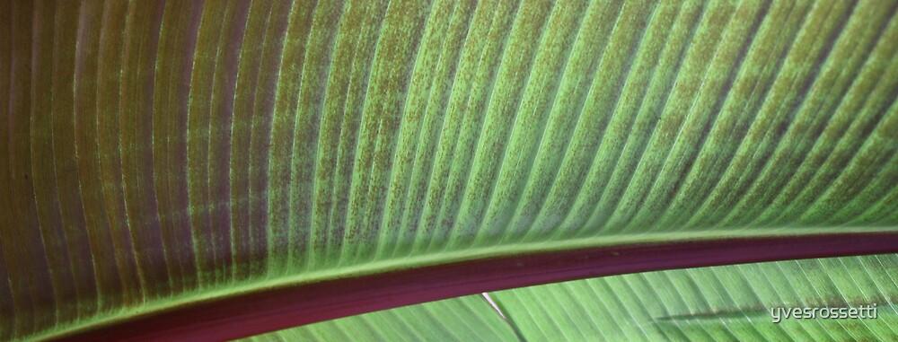 leaf lashes by yvesrossetti