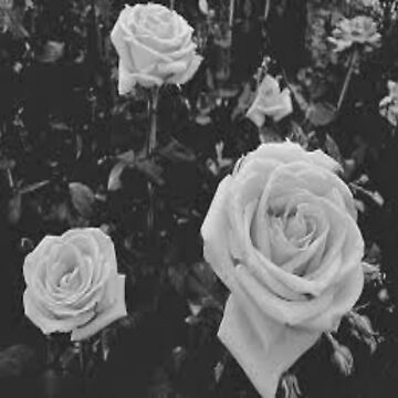Black and White Flowers by Larry69PJ