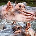 ANIMAL KINGDOM - HIPOPOTAMUS- AMPHIBIUS   by Magriet Meintjes