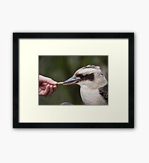 Eating out of the hand Framed Print