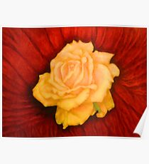 Small Yellow Rose Study Poster