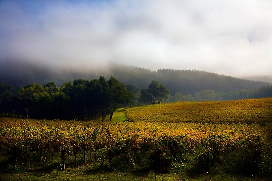 Vineyard Adelaide Hills in Autumn by Gerijuliaj