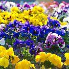 Dutch Flowers by Richie Wessen
