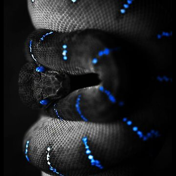 The Black Snake (solid bkground for light tshirts) by AbsinthTears