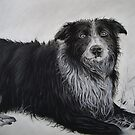 Border Collie by Peter Lawton