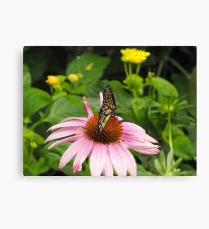 Monarch on pink flower Canvas Print