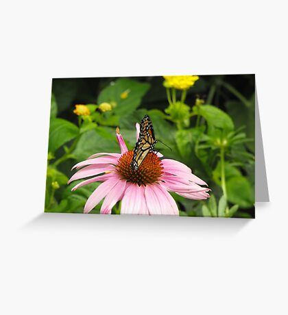 Monarch on pink flower Greeting Card