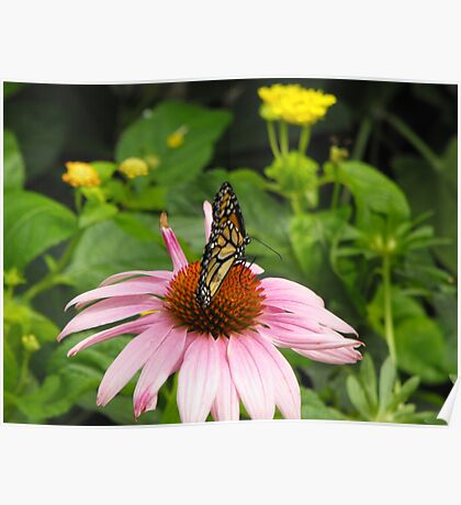 Monarch on pink flower Poster