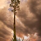 Agave under an Auburn Sky by Sue  Cullumber