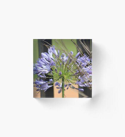 Agapanthus beauty Acrylic Block