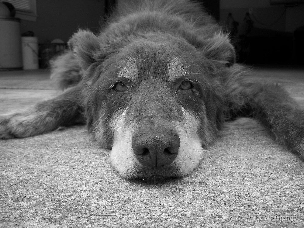 Bored Puppy by Seth LaGrange