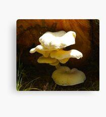 Fungus Canvas Print