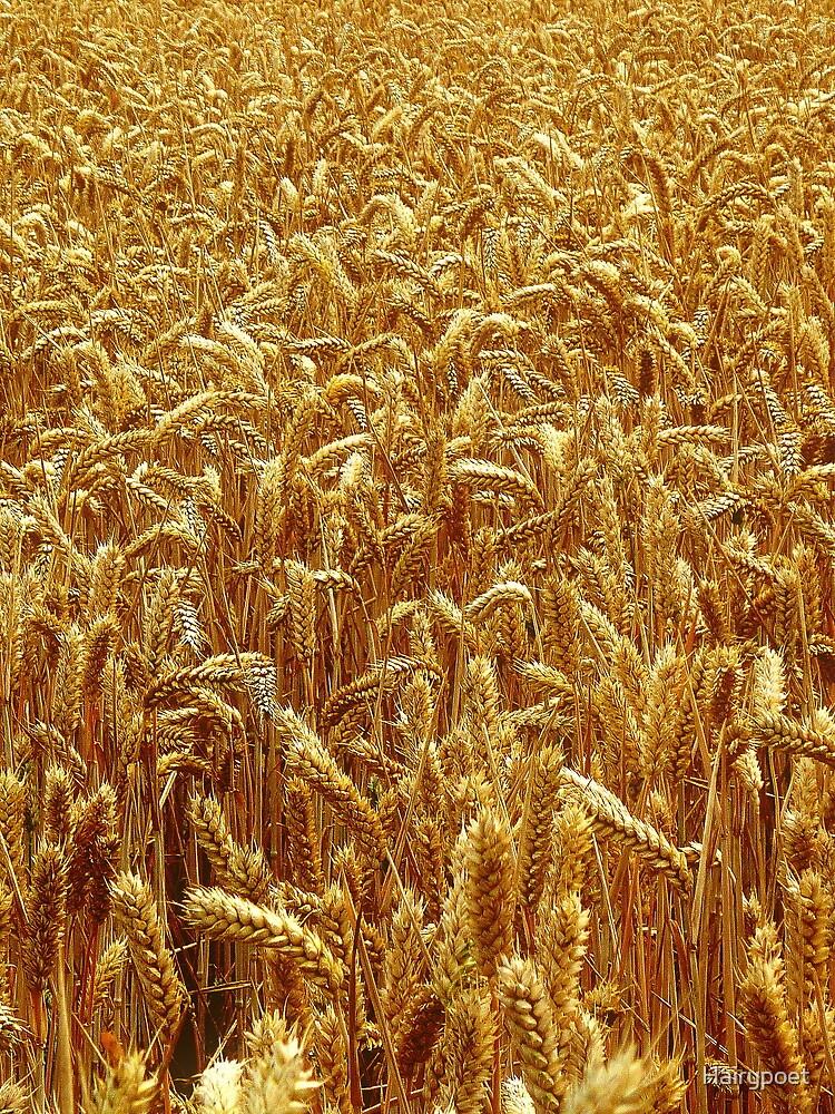 Harvest 2 - Grantham by Hairypoet