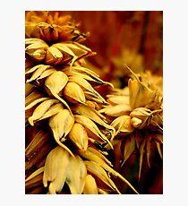 Wheat - Grantham Photographic Print