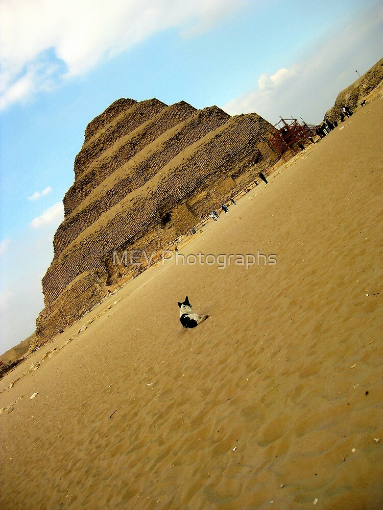 Resting in Saqqara by MEV Photographs