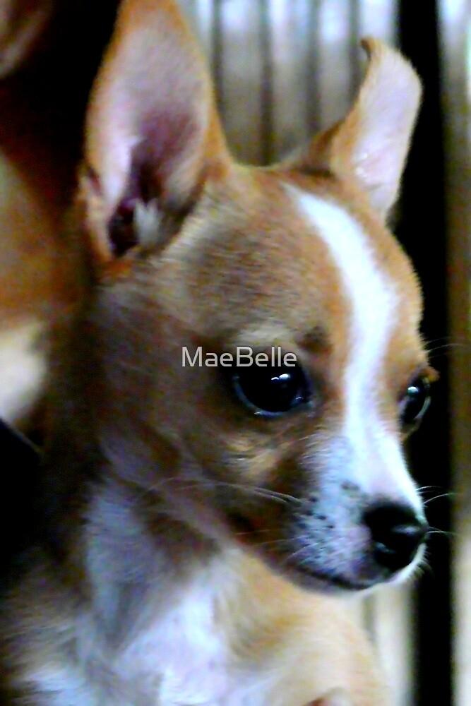 Meet Littlefoot by MaeBelle