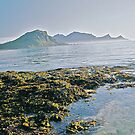 Lofots .My love Norway . Sea landscape. by Brown Sugar  . Views (329) favorited by (1) thanks friends ! by © Andrzej Goszcz,M.D. Ph.D