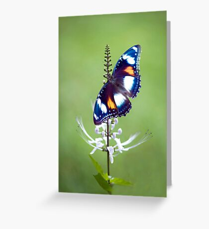 Wings - common eggfly butterfly Greeting Card