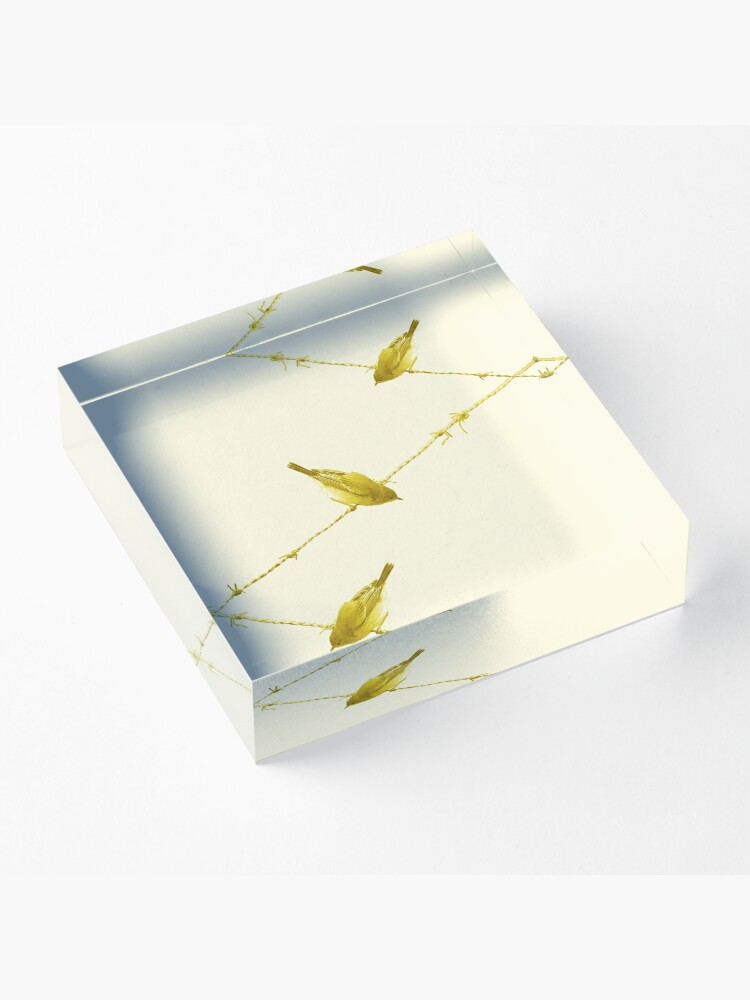 Alternate view of Monochrome - Yellow warblers on the wire Acrylic Block