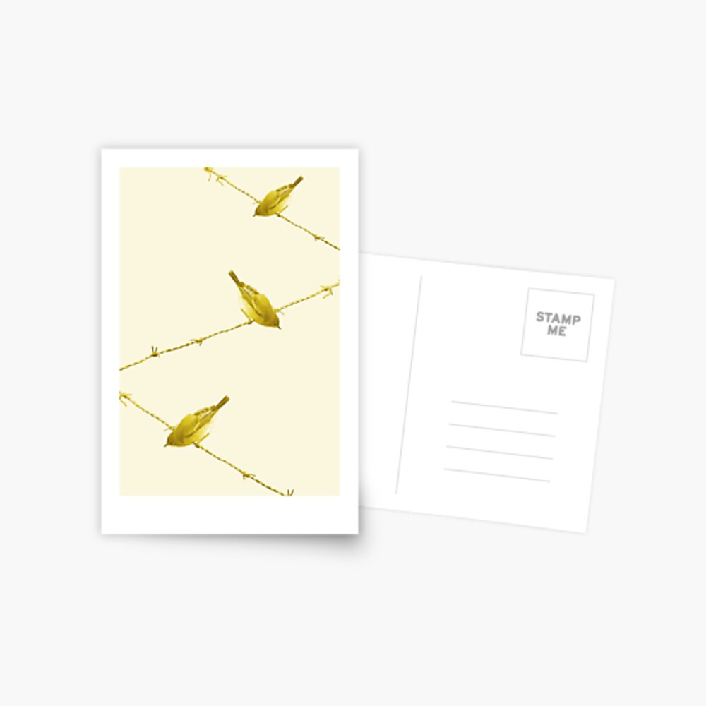 Monochrome - Yellow warblers on the wire Postcard