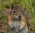 Such A Little Cutie by Betsy  Seeton