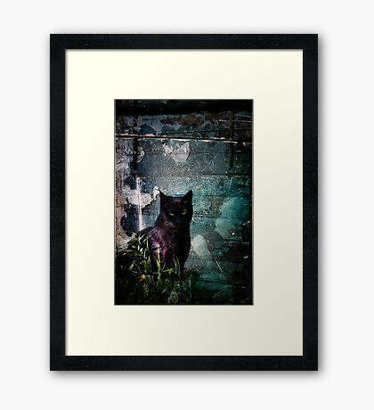 Truth Or Stare? Framed Print