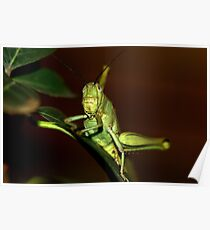 The orthopteron Poster