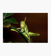 The orthopteron Photographic Print