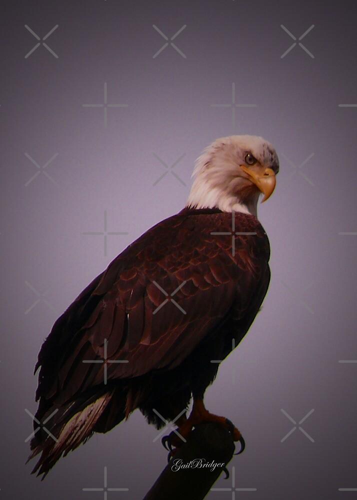 Eagle Eye by Gail Bridger