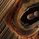 Tigerauge Canyon von spacefrogdesign