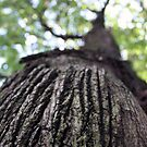 The Tree Trunk  by FoodMaster