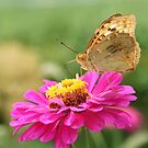 Flower and butterfly by Olga Altunina