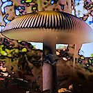 The Magic Of Mushrooms by Neil Ross