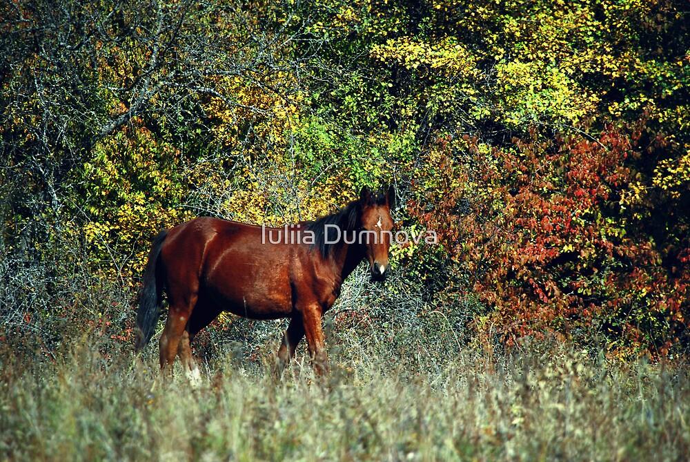 horse by Iuliia Dumnova