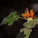 Blühender Baum von CarolM