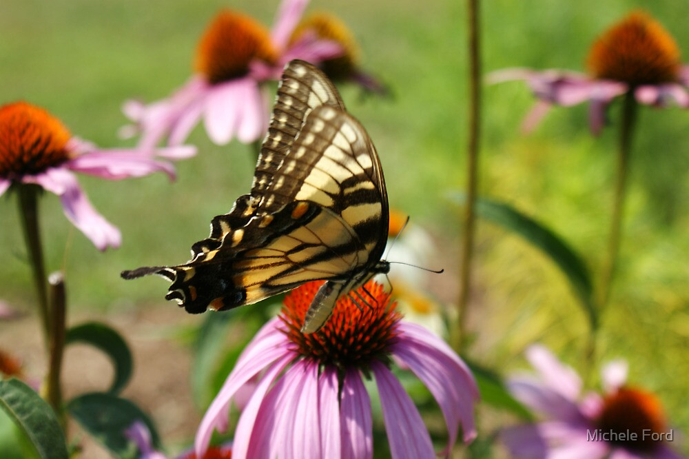 Date With An Eastern Tiger Swallowtail by Michele Ford