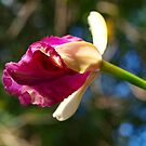 The first Orchid bud of Spring by Virginia McGowan