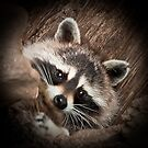 Rocky Racoon by Wanda Staples