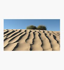 Dune Shrubs Photographic Print